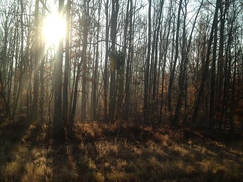 sun fall forest