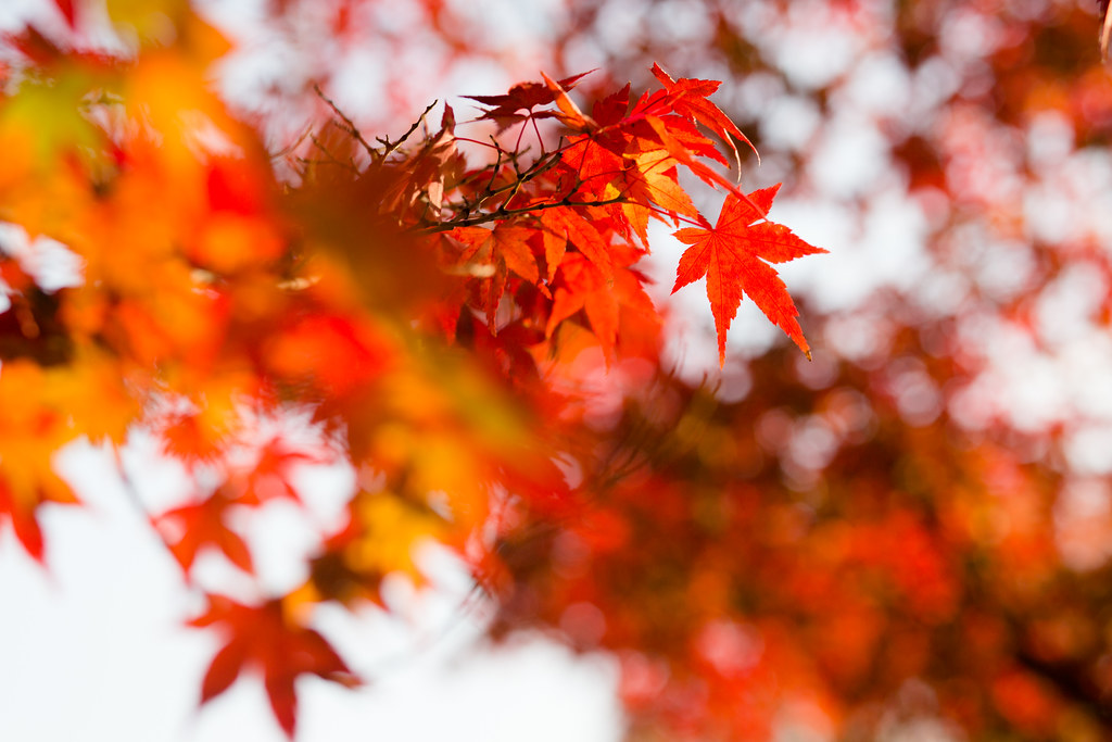 Kyoto-shi, Kyoto Prefecture, Japan, 0.003 sec (1/320), f/5.0, 85 mm, EF85mm f/1.8 USM