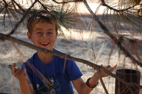 Spider-Treeclimber