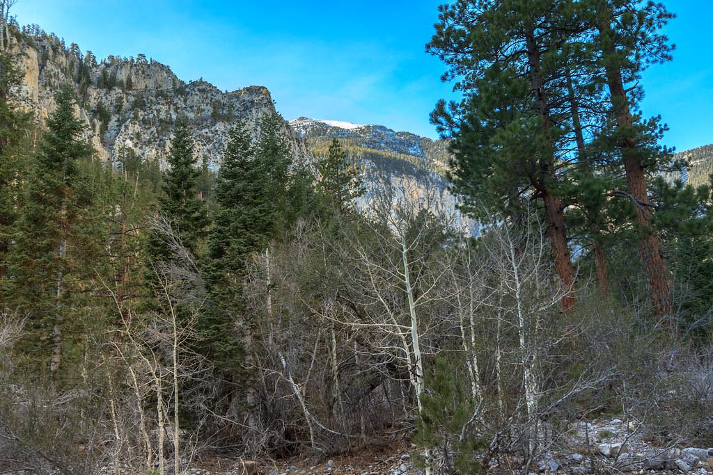 Mary Jane Falls Campground Nevada Around Guides