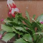 succulents 024
