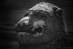 IMG_0045_20121127 'Lion Head #2'