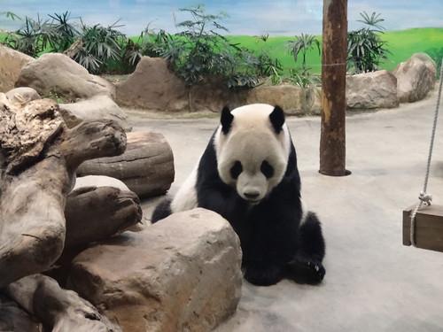 パンダ:The Panda