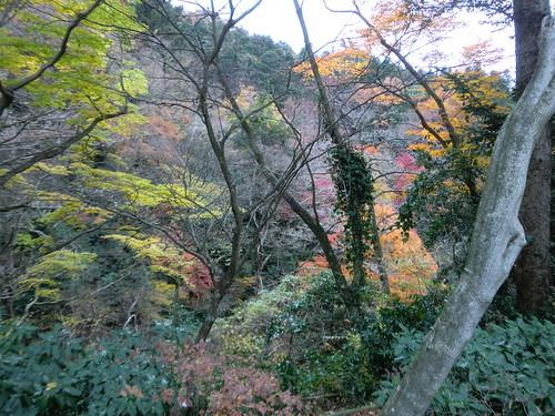 20121203高尾山109