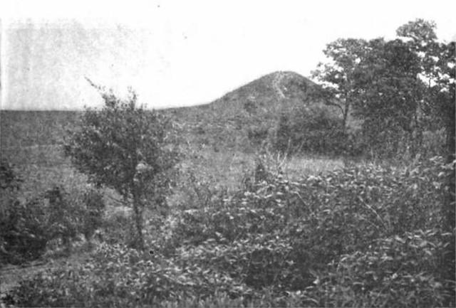 Forest Park_mound