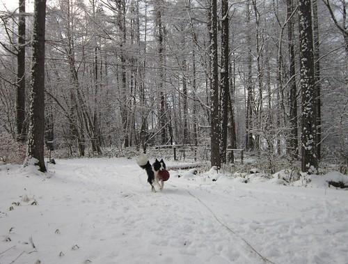 雪上のフリスビー 2012年12月4日14:39 by Poran111