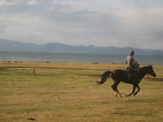 Horses in Kyrguistan