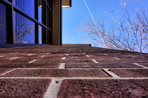 "Runner up to today's #fmsphotoaday (""looking up"") by pvera"