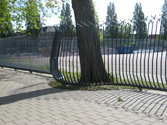 Fence around a tree, Olympiaplein