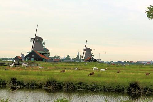 Windmills_8783