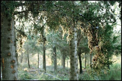 лес10