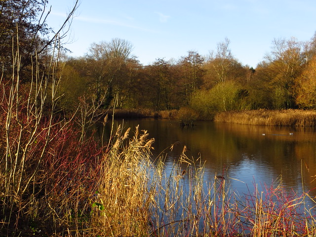 The Bird Sanctuary Pond