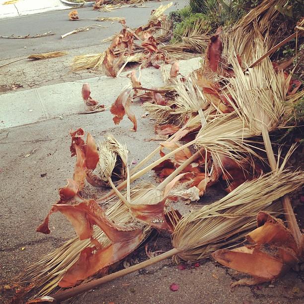 Fallen fronds.