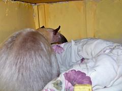 Closet nest