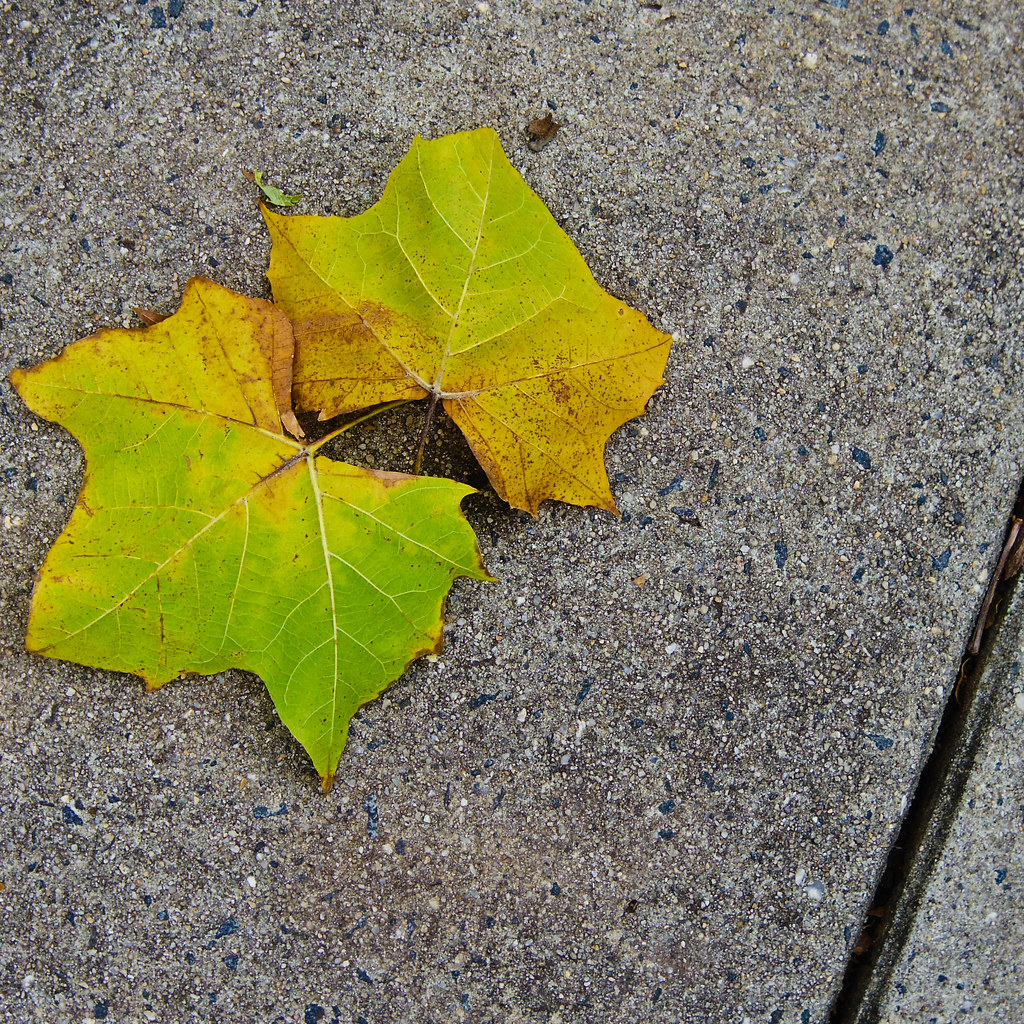 Leafs on the sidewalk