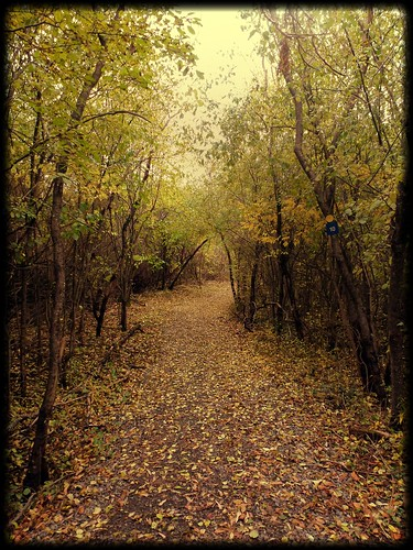 fall leaves trail