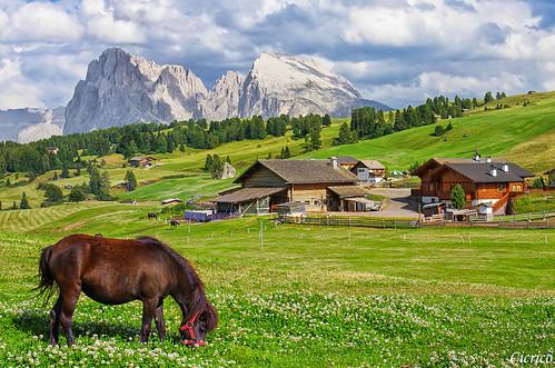 Alpe di Siusi, Seiser Alm (2000 mt. ca) - Località Compaccio, Compatsch by cicrico