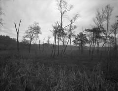 Landscape (Large Format Pinhole)