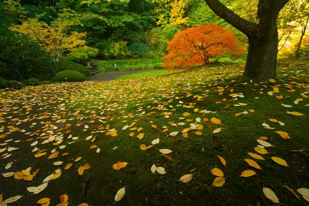 leaf strewn garden  2915