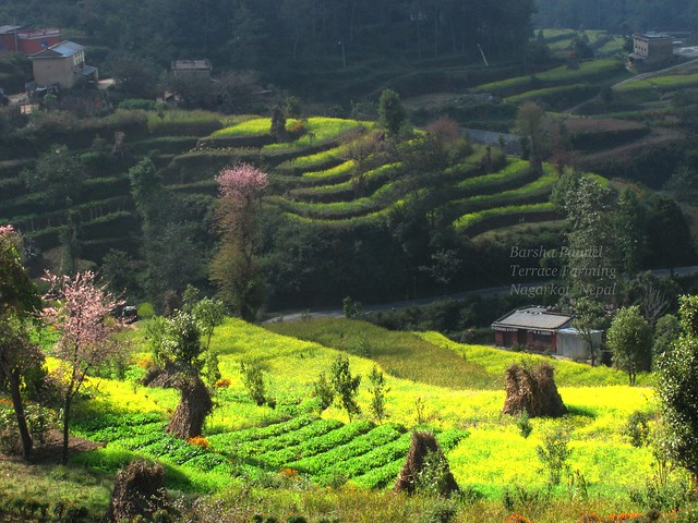 Terrace farming in nagarkot nepal flickr photo sharing for Terrace cultivation