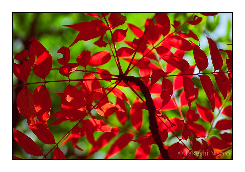 赤 / Red