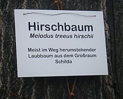 hirschbaum_schild