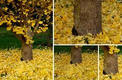 Jardin des Rocailles en automne