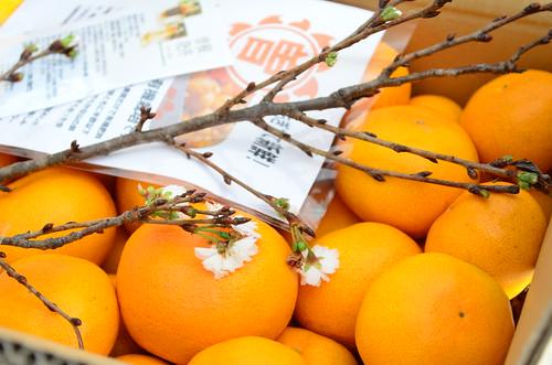香川の低農薬・有機栽培 「曽根花卉みかん」