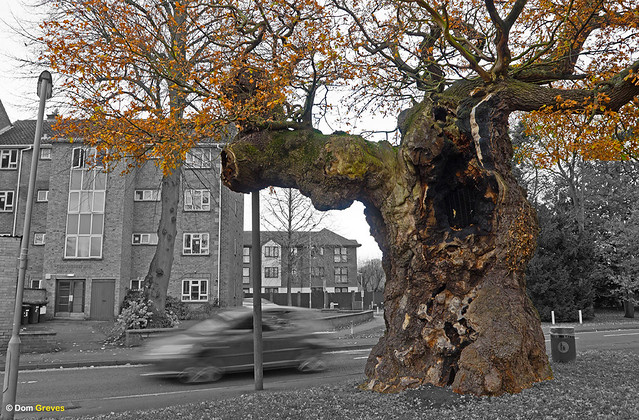 Suburban Oak