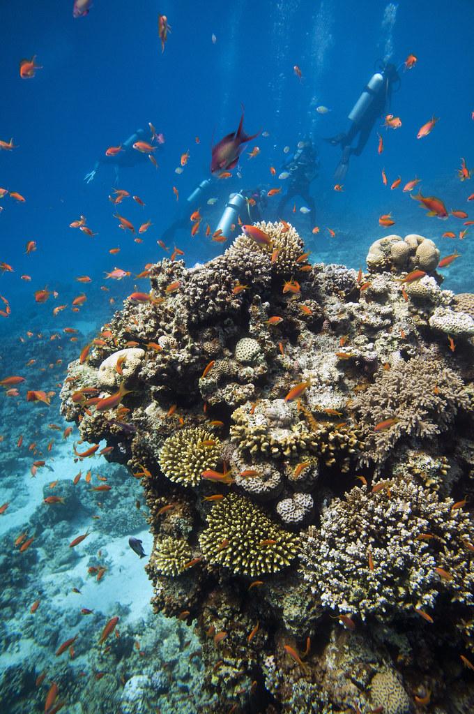 Vista del cañón submarino de Dahab. Egipto. Los arrecifes coralinos del Mar Rojo.