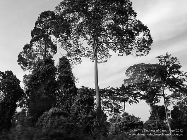 Photographs taken by The Duchess of Cambridge in Borneo
