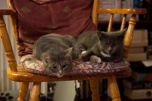 Kittens 10