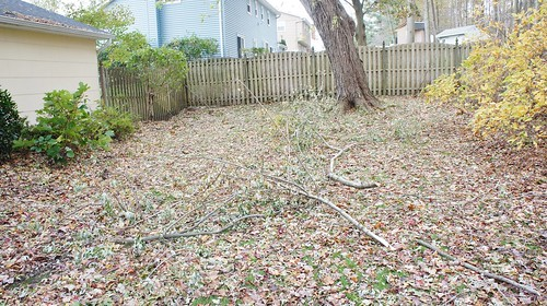 Hurricane Sandy: Backyard on November 5th (Pre-Nor'easter)