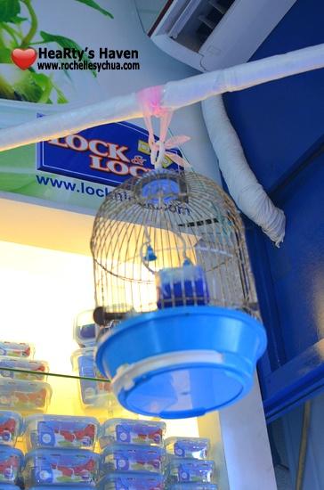Lock & Lock Bird Cage