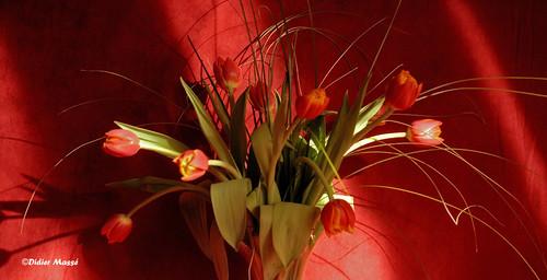 "Фотография: ""Bouquet de tulipes"" Автор: didier95"