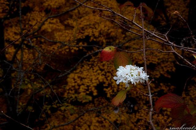 「花咲く」 長谷寺 - 奈良
