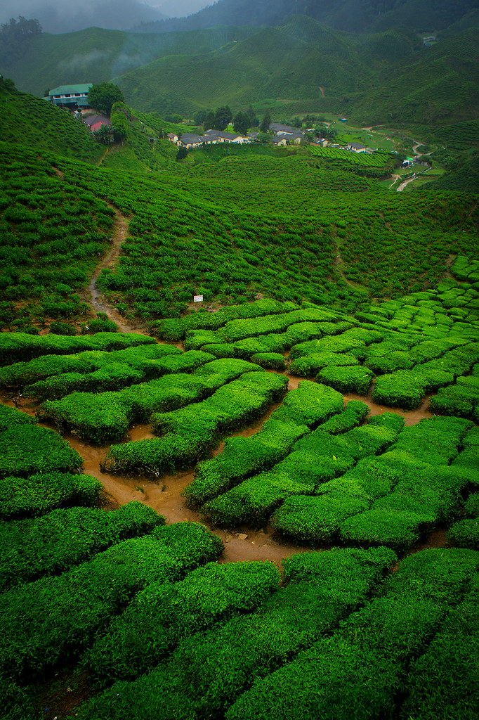 Cameron Highlands DEC 2012