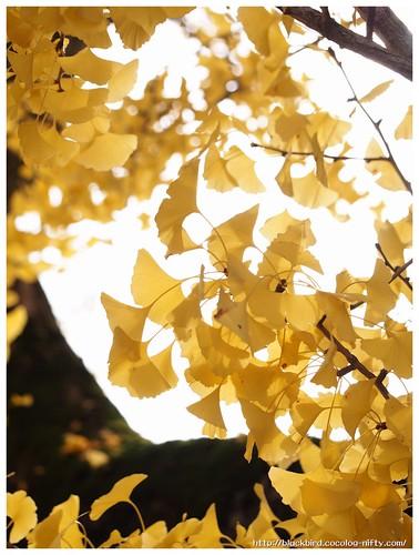 Red Leaves on Tsushima Srine #05