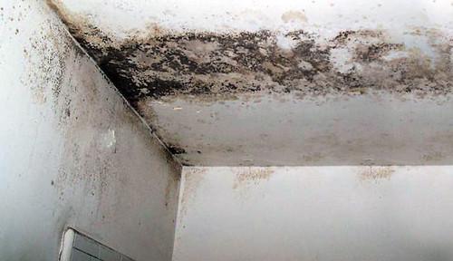 Pinturas anti mohos evita la formaci n de hongos en - Eliminar hongos de la pared ...