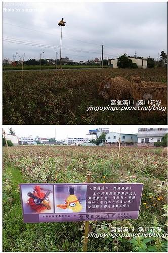 嘉義溪口_溪口花海20121209_R0010821