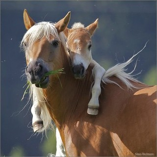 Horses - child hugging mother 03