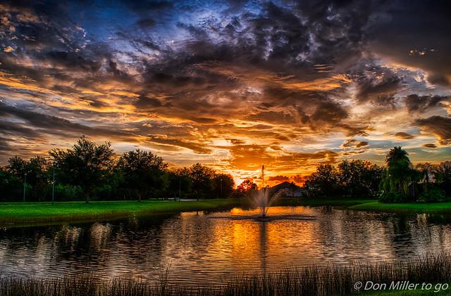 Florida Gold