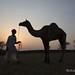 Pushkar Camel Fair by Rolandito.