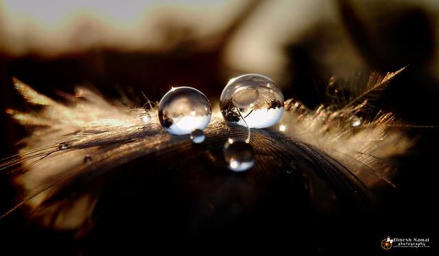 Water Drops 42