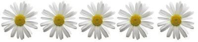 cindybug555 daisy div