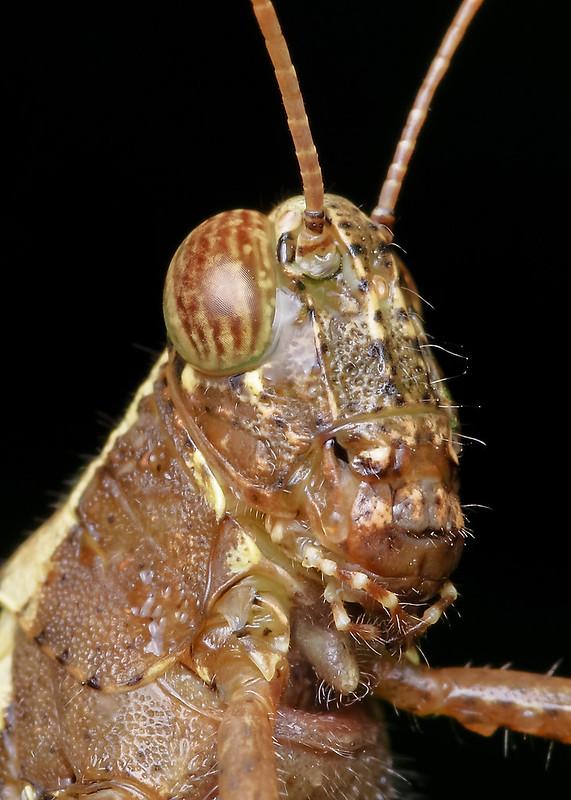 [IMGP0392-pp] Grasshopper