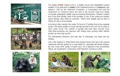Gorillas: Limbe Wildlife Centre