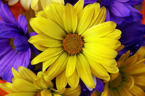 yellowflower_closeup