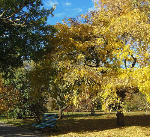 Golden Autumn / Happy Monday Bench by swetlanahasenjäger