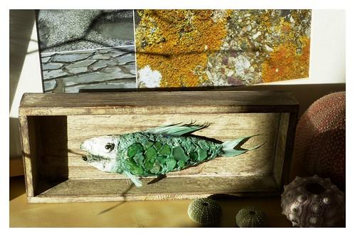 Glasfisch i Schaller 2012-11-16